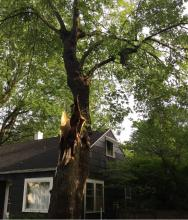 Champaign tree damage, May 23, 2019