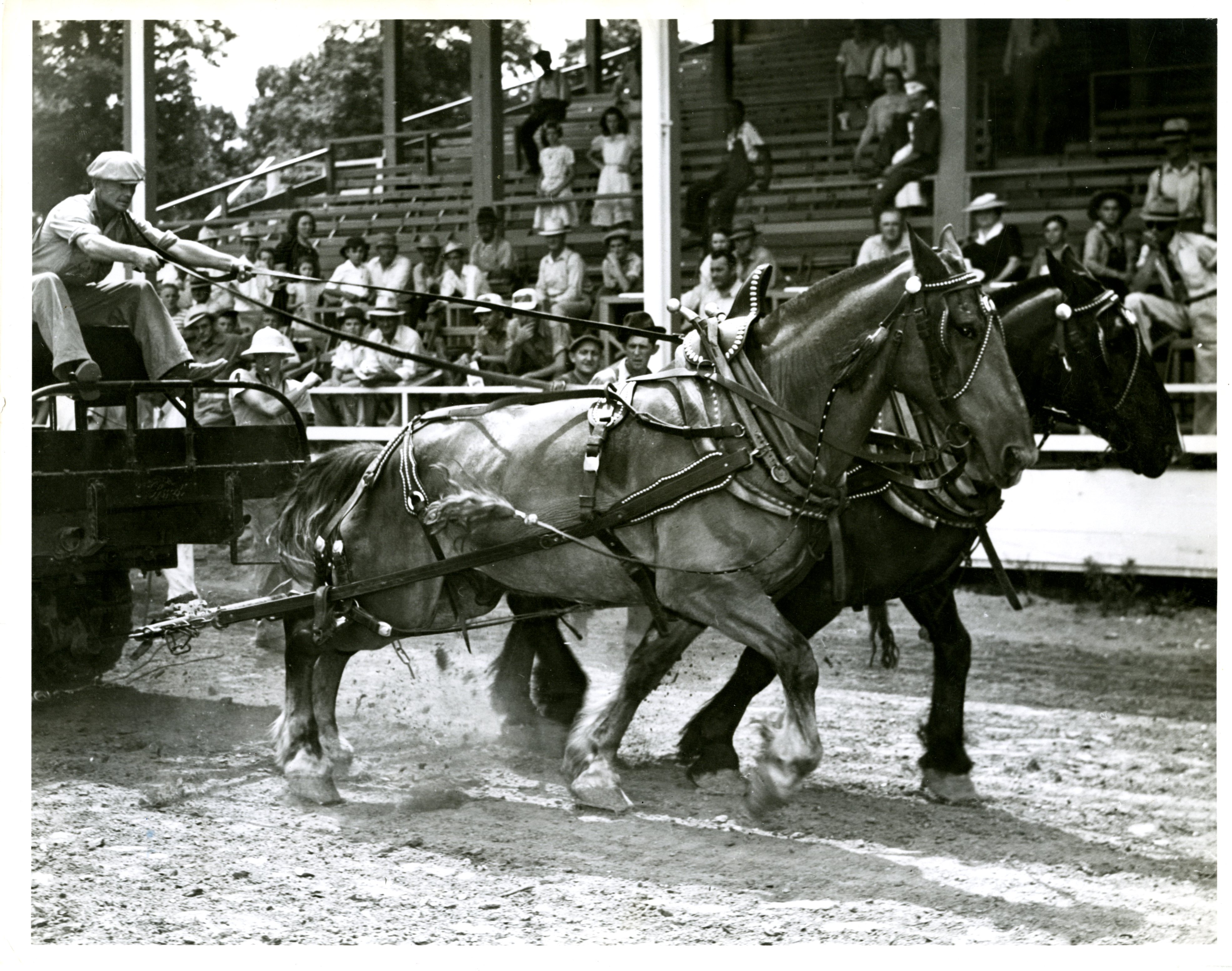 The two winning horses in the 1940 horse pulling contest